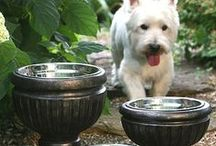 For the Home: Living with Pets / I've had dogs, bunnies, cats, and a hedgehog. Here are some things that make living with them easier and more elegant. / by Amy Scheve