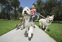 USAW Pets / four-legged family members, service animals and other creatures we love / by USA WEEKEND