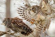 Avian / by Cri