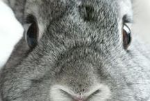 Bunny baby ♥ / by Anne Brown