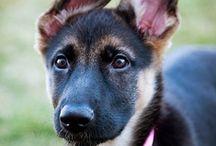 My favorite pets / by Brandy Miller