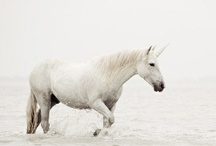 PHOTOGRAPHY || WHITE / by || AHARON ||