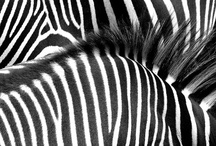 PHOTOGRAPHY || STRIPES / by || AHARON ||