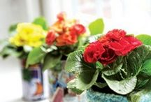 Grandparent gift ideas / by Brandy Miller