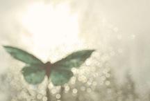 Sparkly / All that glitters... / by Karen Erickson