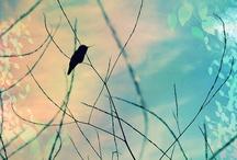 Birdies / by Karen Erickson
