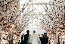 weddings / by Alison Weigl