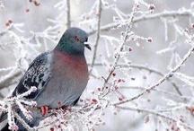 Winter / by Karen Erickson