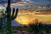 Arizona / It's not just a desert. There's so much more! / by Amy Moore