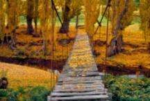 Fall / by Madellen Szymborski