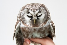 Owls are Awesome / by Justin Edmund