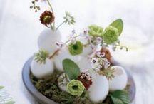 Spring / by Rachel Fee-Prince