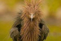 Birds / by Tina Cline