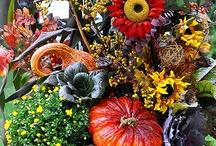 Fall / by Cindy Davidson