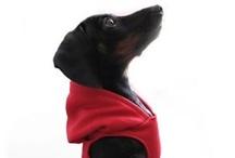 Puppy Love / by Lori Randall Stradtman