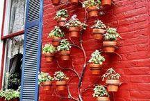 Gardening / by Mahochy Godoy