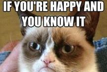 Grumpy Cat / by Michele Thomas