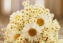 Nature // Flowers / Art inspiration / by Kaci Ferguson