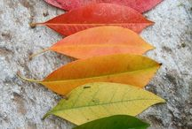 Fall Fun for the Whole Family / Montessori inspired ideas, lessons & activities for the home and the classroom.  / by Marnie of Carrots Are Orange - Montessori Living and Learning