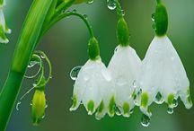 ʃιΘώεર ρΘώεર / Pretty flowers. / by Shelly Mackey