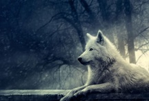 Spirithoods Inner Animal / by Stonia Bonia