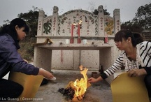 Water Pollution in China / by Greenpeace