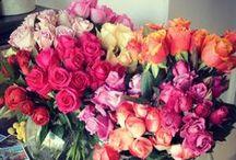 Flowers / by Alma Figueroa