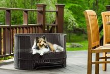 Cool Pet Products / by RefinedKind Pet Products
