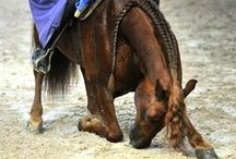 Wonderful world of Horses <3 / Anything that captures my love for horses <3 / by Kaylee Clark