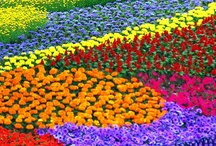 Garden / My dream garden~ / by Holly Berry