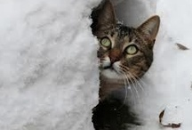 Snowmageddon  / Snow storms, #snowmageddon, #snowpocalypse and monster storms caused by climate change. / by June Stoyer