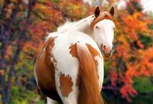 Horses  / by Belliacres Homestead