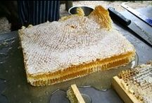 Homesteading - Bees / by Belliacres Homestead