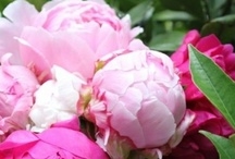 Peonies / by Kasey Todd