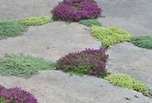 Garden ideas / by Wendy Shapiro