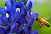 Texas Butterfly & Hummingbird Gardening / by Kasey Todd