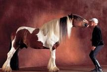Equine Beauty / Horses / by Michelle Cote'