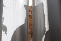 Cats! / by Carmen .