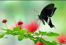 Butterflies / by Alma Mayorga