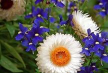 flowers / by Vilaiwan Twichasri