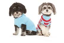 Doggie Sweaters / by West Paw Design