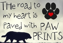 We Love Pets! / by West Paw Design
