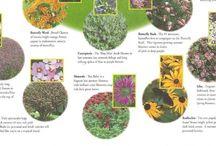 Gardening Tips / Useful gardening tips / by Mandi Van Winkle