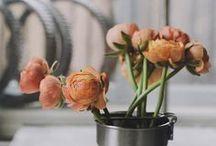 Just Flowers / by H.Bloom Weddings
