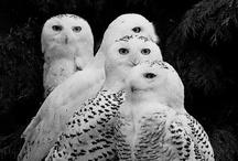 Owls! / by Amanda Cheatham