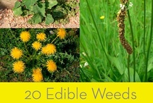 FOOD: Edible Weeds/Herbs Recipes / by Jessica Drollette: Health and Life Coach