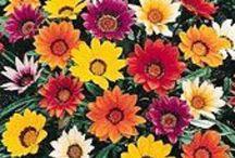 Gardening / by Elaine Dieball
