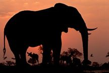 Elephants / by ✨jOwaNERtribble✨ 'jay'