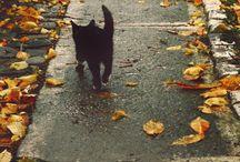 Autumn / by Hannah Burke