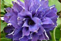 Flowers / by Nancy Cones